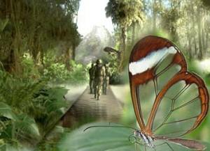 safari copia