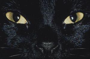Maremoto_el sindrome del perro negro 3