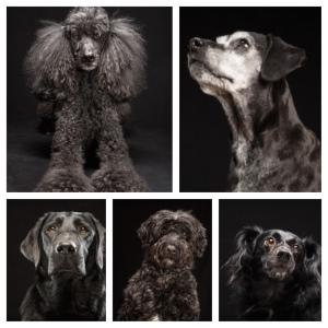 Maremoto_el sindrome del perro negro 6